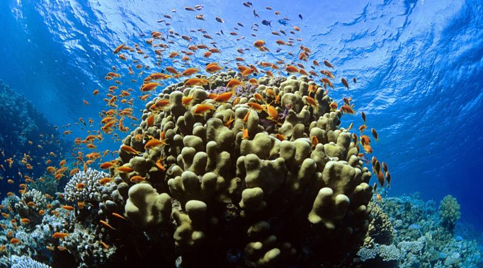 tropical-reef-fish_00440524