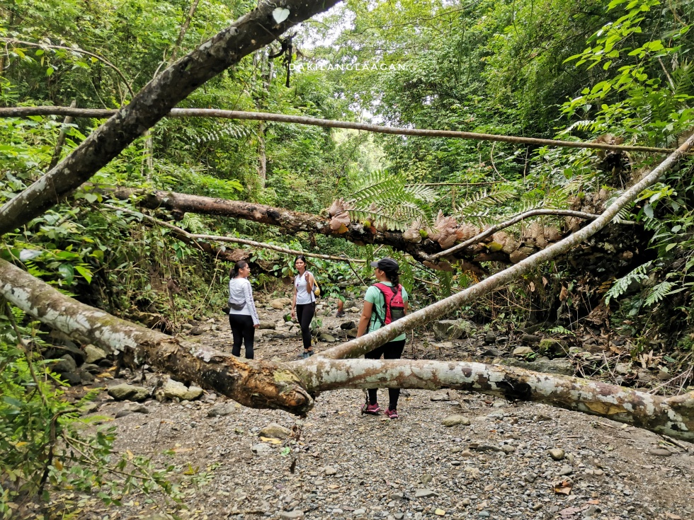 Spartan Trail: Farewell to Cebu City's Favorite Hiking Destination?